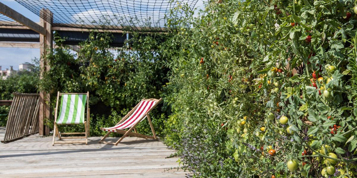 Agriculture urbaine : Le Jardin Perché, premier incubé de Sous les Fraises