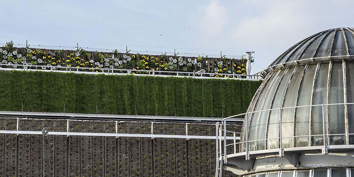 «Paris sous les fraises» : 1.000 m² de culture sur les toits des Galeries Lafayette